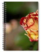 George Burns Rose Spiral Notebook