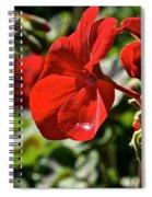 Geranium Gem Spiral Notebook