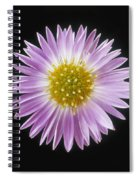 Gerber Daisy In Black Background Spiral Notebook