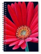 Gerbera Daisy 1 Spiral Notebook