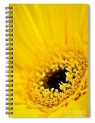 Gerbera Flower Spiral Notebook