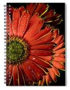 Gerbera Orange Spiral Notebook