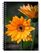 Gerberas Spiral Notebook
