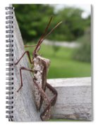 Giant Assassin Bug Spiral Notebook