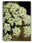 Giant Buckwheat Flower Spiral Notebook