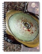 Giant Keyhole Limpet Spiral Notebook