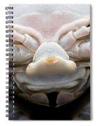 Giant Marine Isopod Spiral Notebook