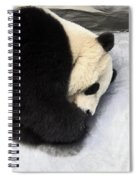 Giant Panda Portrait Spiral Notebook