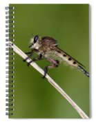 Giant Robber Fly - Promachus Hinei Spiral Notebook
