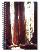 Giant Sequoia Spiral Notebook