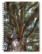 Giant Sequoias Spiral Notebook