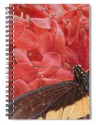 Giant Swallowtail - 3 Spiral Notebook
