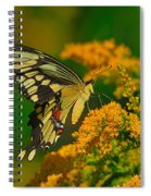 Giant Swallowtail On Goldenrod Spiral Notebook
