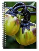 Gilo Black Stem Spiral Notebook