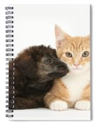 Ginger Kitten And Toy Poodle Spiral Notebook