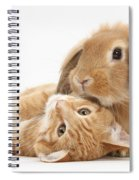 Ginger Kitten Lying With Sandy Lionhead Spiral Notebook