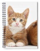 Ginger Kitten With Red Guinea Pig Spiral Notebook