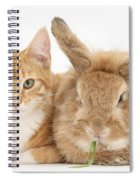 Ginger Kitten With Sandy Lionhead-cross Spiral Notebook