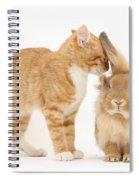 Ginger Kitten With Sandy Lionhead Rabbit Spiral Notebook