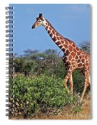 Giraffe Against Blue Sky Spiral Notebook