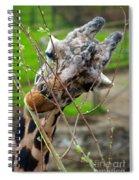 Giraffe Eating Spiral Notebook