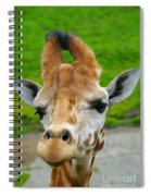 Giraffe In The Park Spiral Notebook