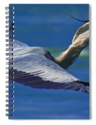 Gliding Great Blue Heron Spiral Notebook