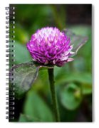 Globe Amaranth Bicolor Rose Spiral Notebook