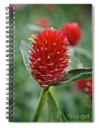 Globe Amaranth Spiral Notebook