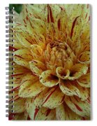 Glorious Gloriosa  Spiral Notebook