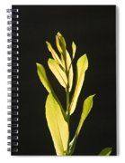 Glorious Willow Aglow Spiral Notebook