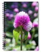 Glowing Globe Amaranth Spiral Notebook