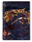 Glowing Maple Leaves Spiral Notebook