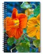 Glowing Nasturtiums 1 Spiral Notebook