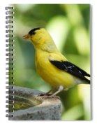 Gold Finch At The Bird Bath Spiral Notebook