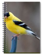 Gold Finch Spiral Notebook