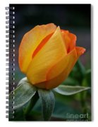 Gold Medal Bud Spiral Notebook