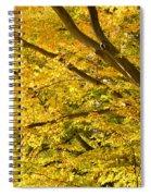 Golden Autumn Spiral Notebook