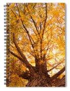 Golden Autumn View Spiral Notebook