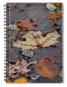 Golden Maple Dew Drops Spiral Notebook