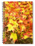Golden Maple Leaves Spiral Notebook