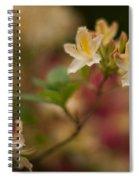 Golden Morning Spiral Notebook