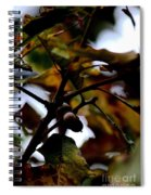 Golden Oak At Nightfall Spiral Notebook