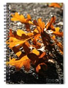 Golden Oak Shadows Spiral Notebook