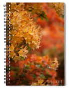 Golden Orange Radiance Spiral Notebook