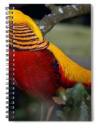 Golden Pheasant Posing Spiral Notebook
