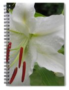 Golden Rayed  Lily Spiral Notebook