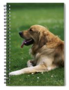 Golden Retriever Dog Laying In The Grass Spiral Notebook