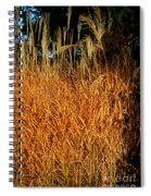 Golden Silver Grass Spiral Notebook