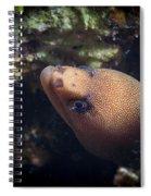 Golden Tail Eel Spiral Notebook